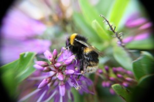 Beautiful Bee by Heather Carver
